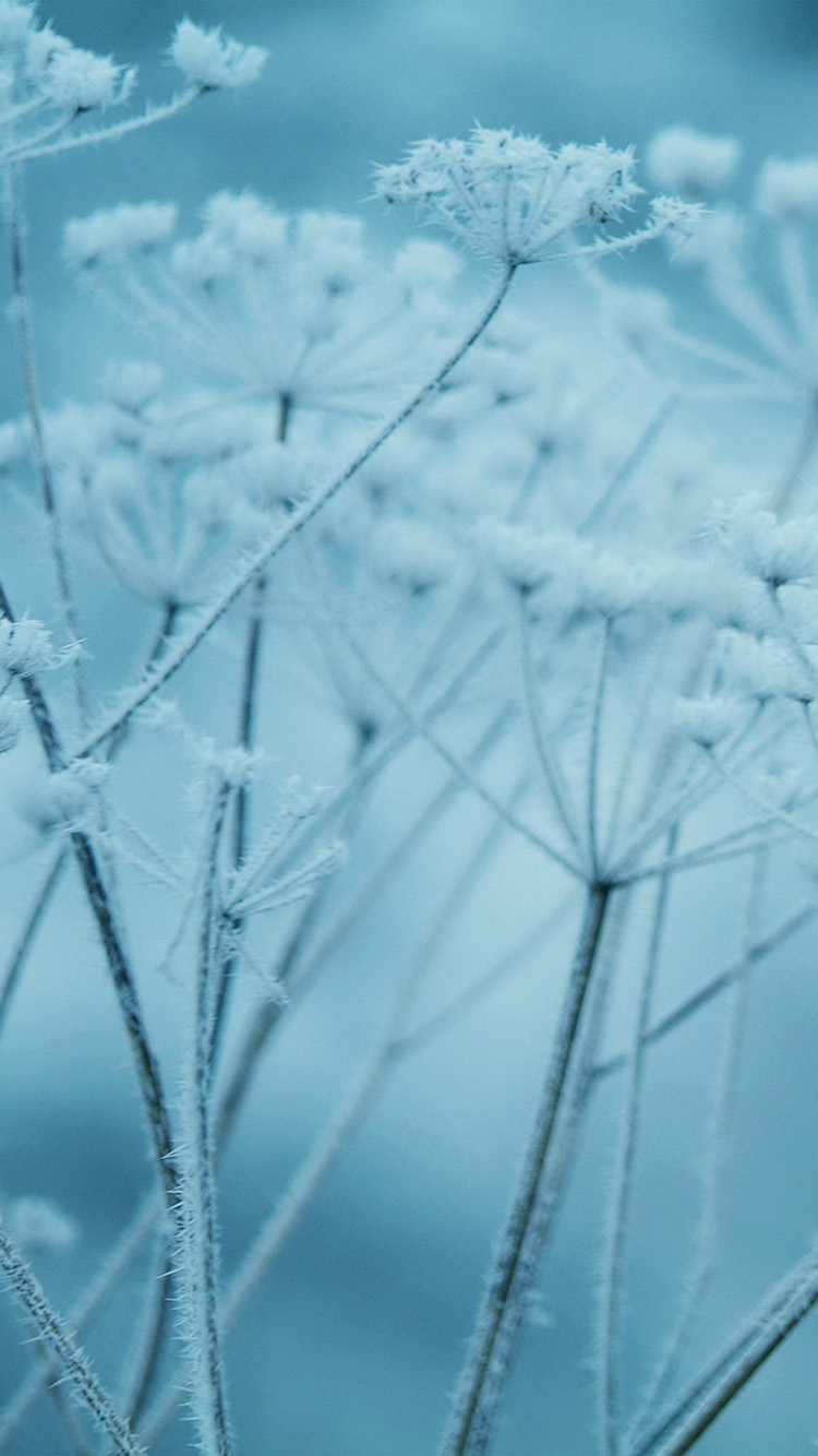 iPhone6papers.co-Apple-iPhone-6-iphone6-plus-wallpaper-ne20-ipad-snow-winter-flower-blue-nature-bokeh