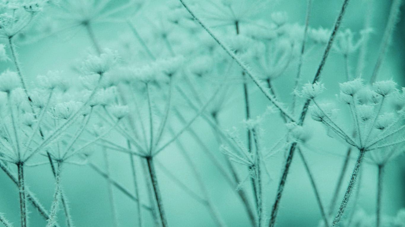 desktop-wallpaper-laptop-mac-macbook-air-ne21-ipad-snow-winter-flower-green-nature-bokeh-wallpaper
