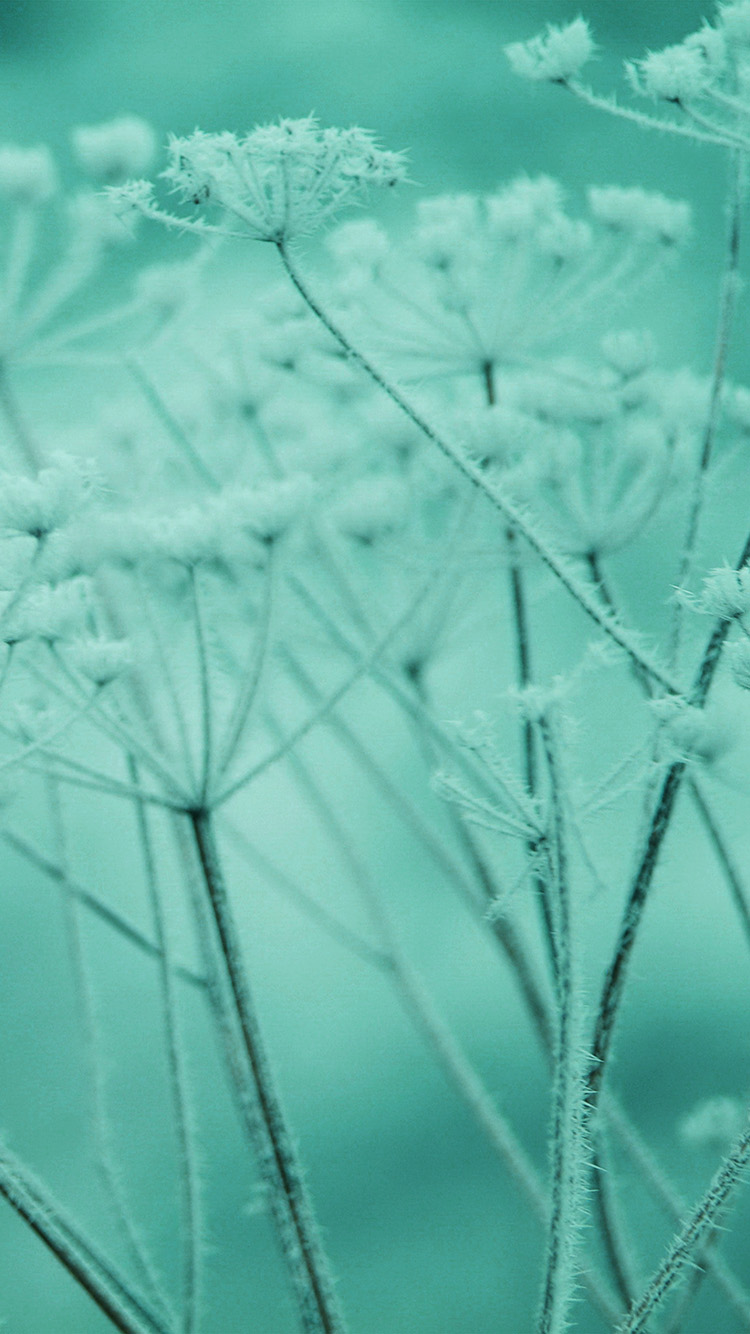 Papers.co-iPhone5-iphone6-plus-wallpaper-ne21-ipad-snow-winter-flower-green-nature-bokeh