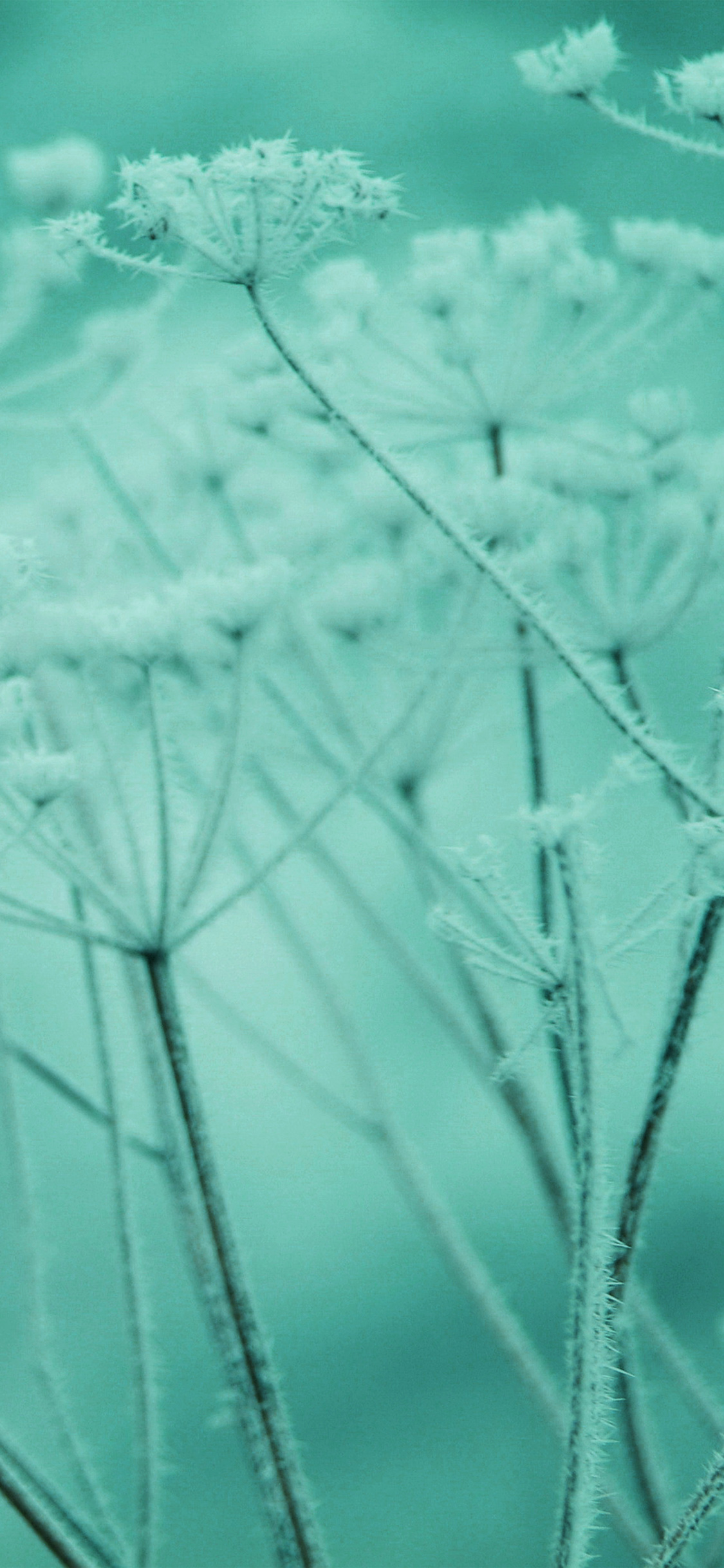 iPhonexpapers.com-Apple-iPhone-wallpaper-ne21-ipad-snow-winter-flower-green-nature-bokeh