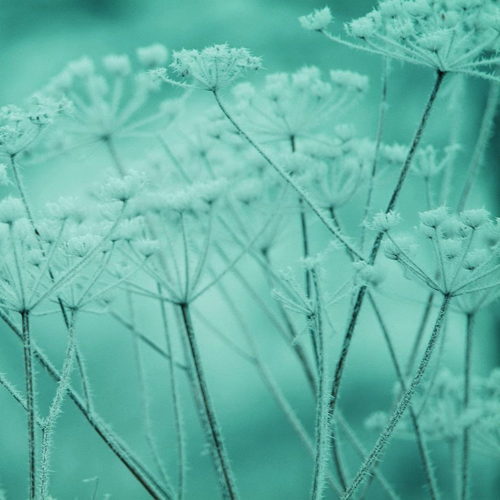 wallpaper-ne21-ipad-snow-winter-flower-green-nature-bokeh-wallpaper