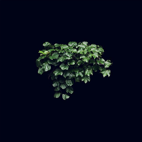 iPapers.co-Apple-iPhone-iPad-Macbook-iMac-wallpaper-ne30-truevine-dark-nature-green-flower-leaf-wallpaper