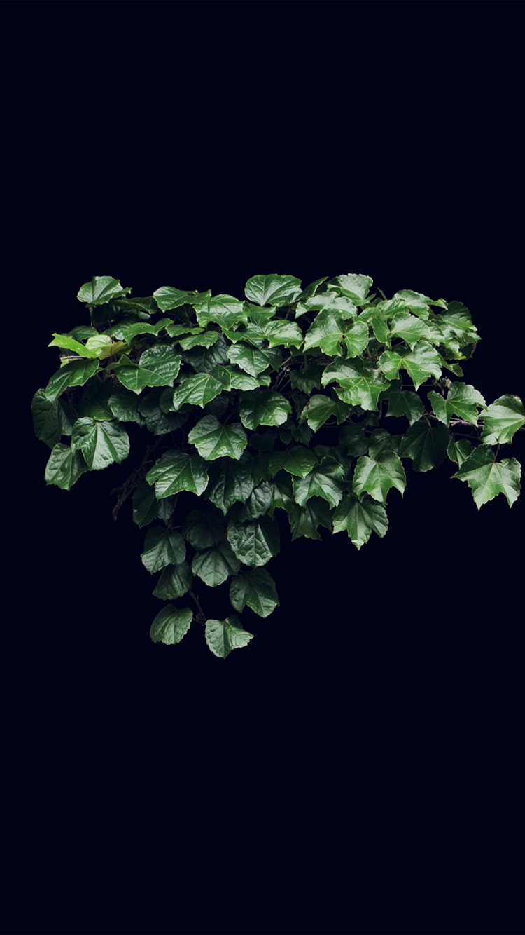 iPhone6papers.co-Apple-iPhone-6-iphone6-plus-wallpaper-ne30-truevine-dark-nature-green-flower-leaf