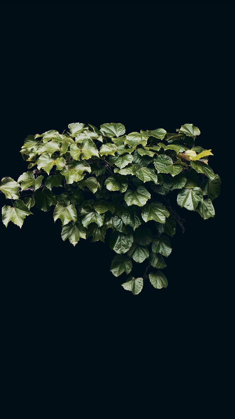 iPhone7papers.com-Apple-iPhone7-iphone7plus-wallpaper-ne31-truevine-dark-nature-green-flower-leaf-minimal