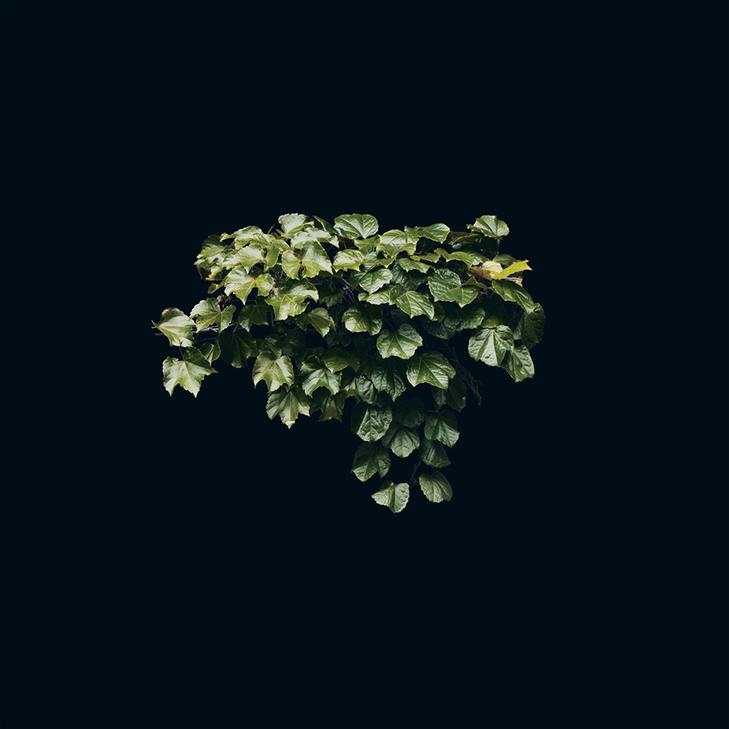 wallpaper-ne31-truevine-dark-nature-green-flower-leaf-minimal-wallpaper