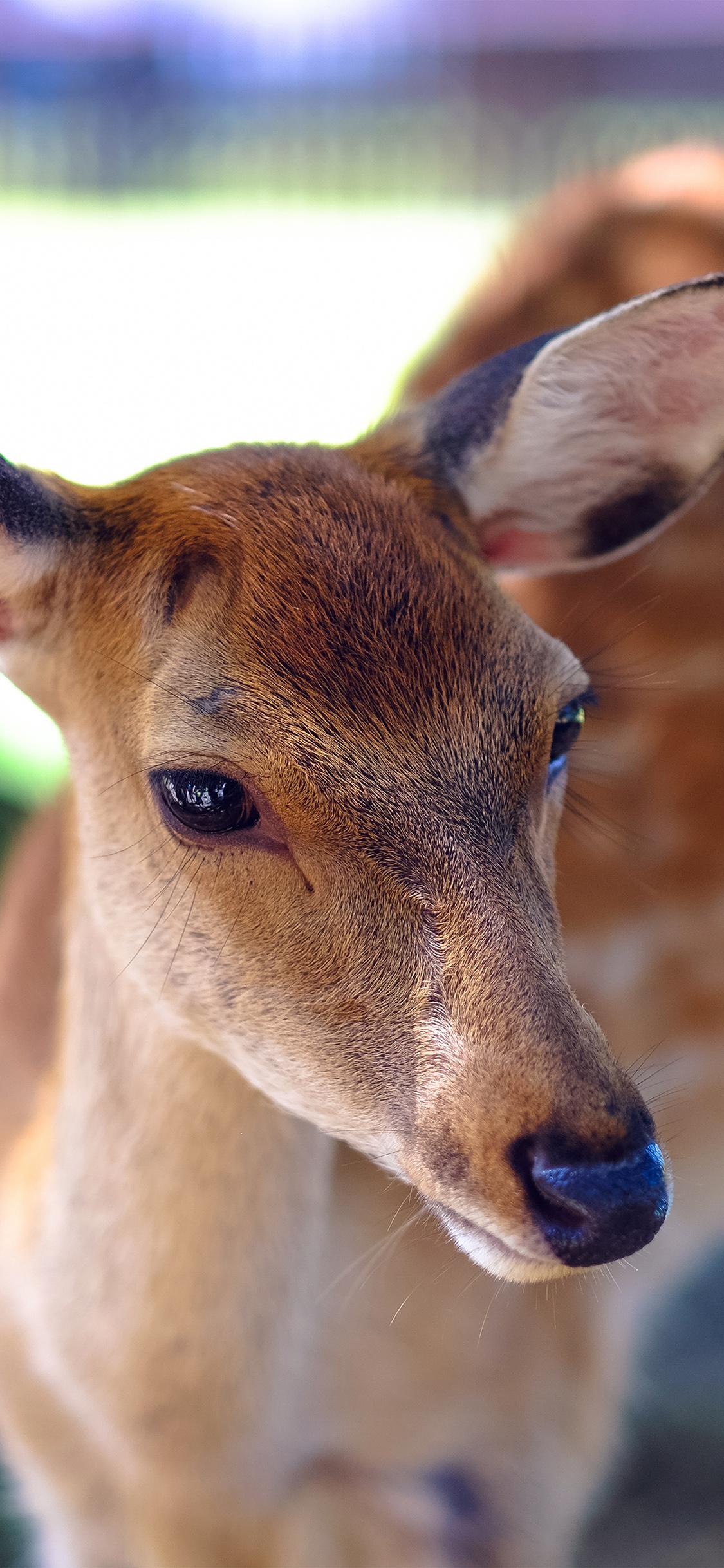 iPhoneXpapers.com-Apple-iPhone-wallpaper-ne38-deer-cute-animal-soft-nature