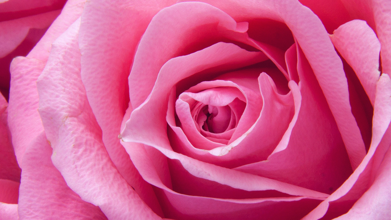 desktop-wallpaper-laptop-mac-macbook-air-ne43-flower-pink-rose-zoom-love-wallpaper