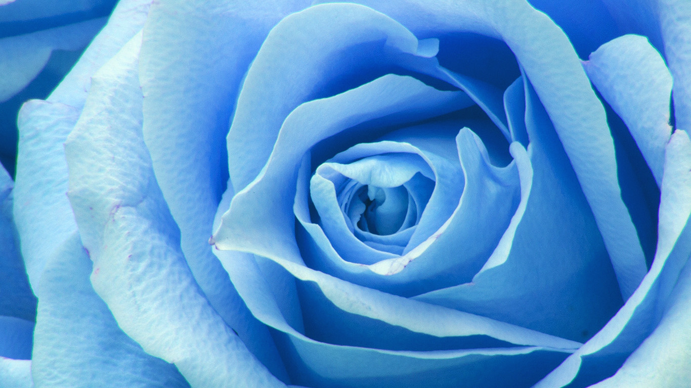 desktop-wallpaper-laptop-mac-macbook-air-ne44-flower-blue-rose-zoom-love-wallpaper