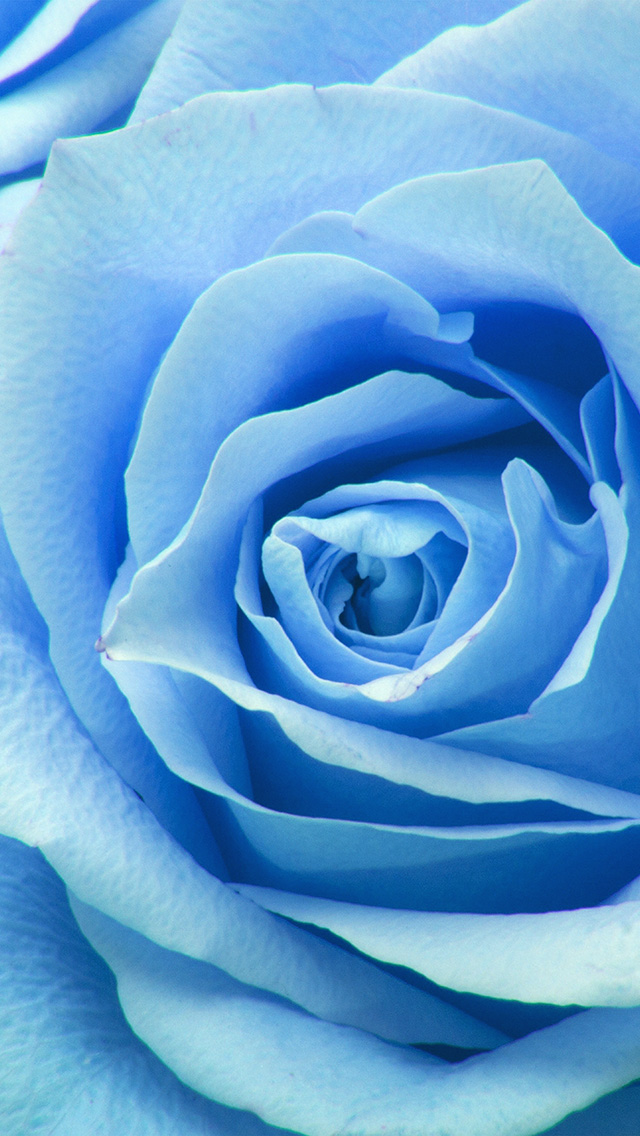 freeios8.com-iphone-4-5-6-plus-ipad-ios8-ne44-flower-blue-rose-zoom-love