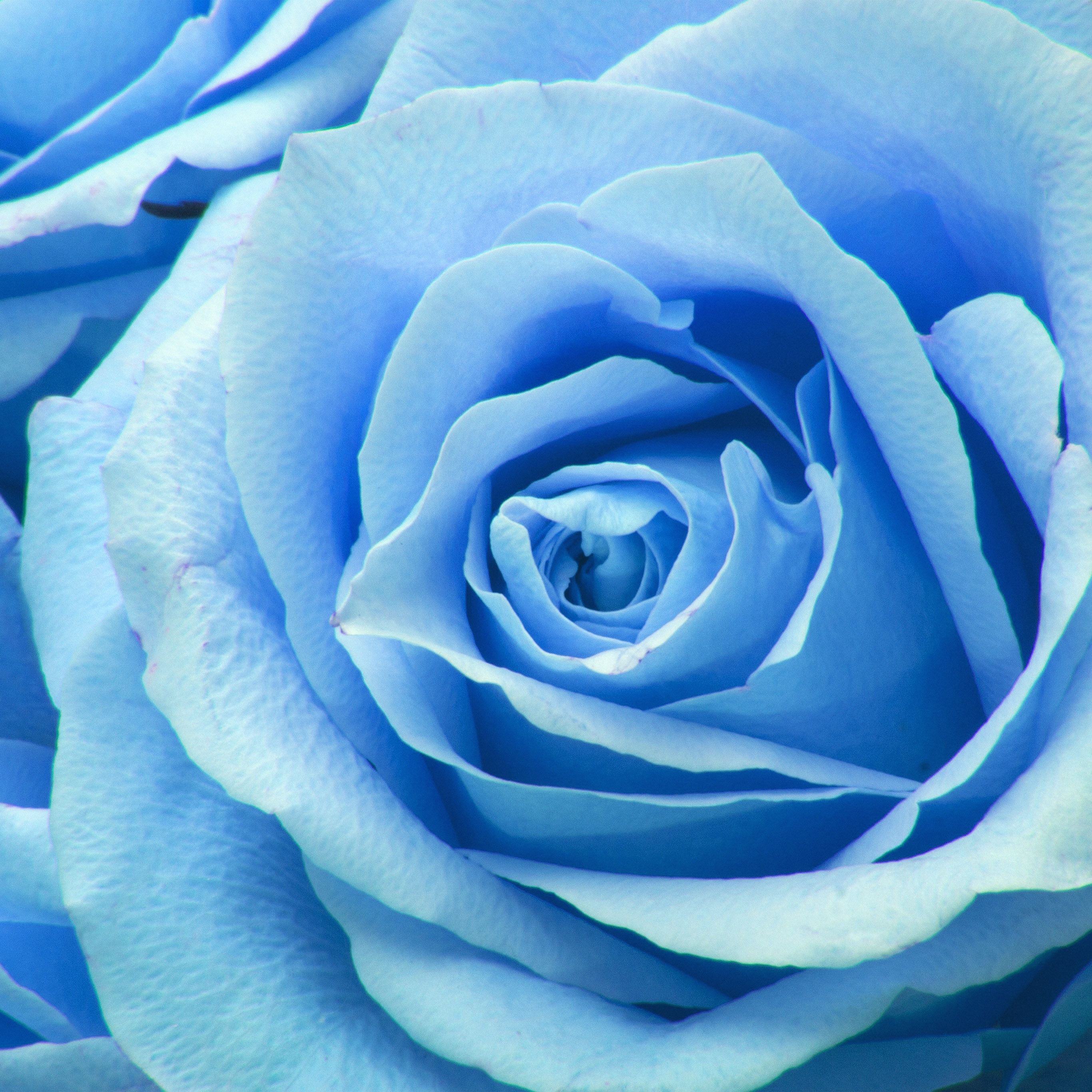 Amazing Wallpaper Love Blue - papers  Snapshot_257639.jpg