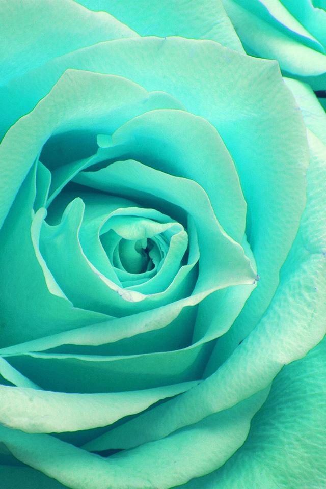 Freeios7 Com Iphone Wallpaper Ne45 Flower Greeb Rose Zoom Love