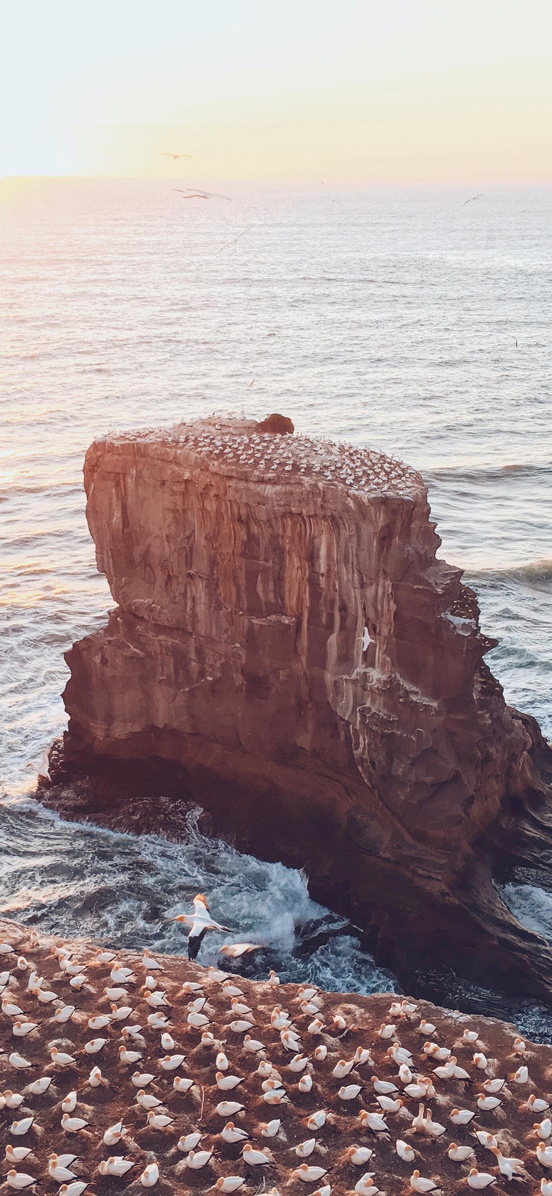 iPhoneXpapers.com-Apple-iPhone-wallpaper-ne48-sea-seagull-ocean-sunset-wave-summer-nature