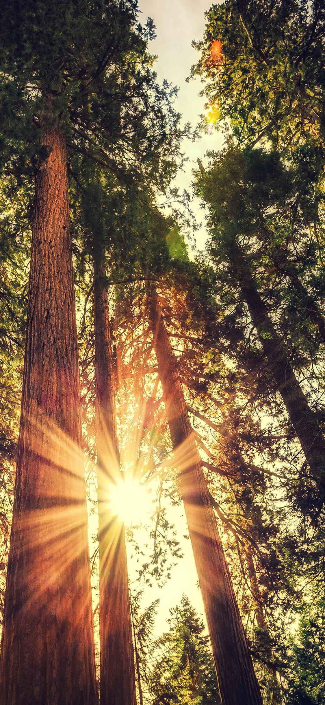 Iphonexpapers Com Iphone X Wallpaper Ne71 Sunset Between Trees Wood Nature