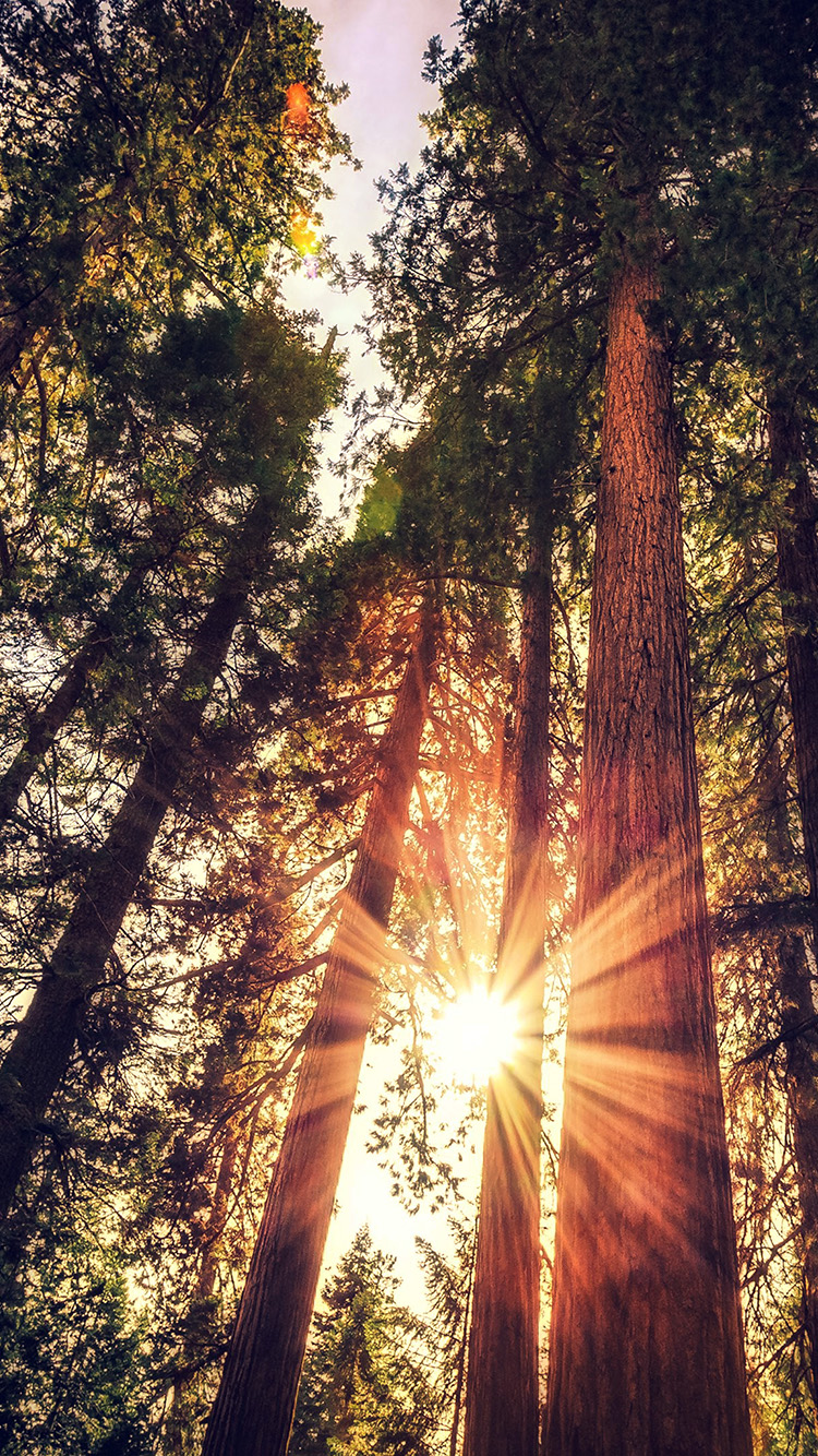 iPhone6papers.co-Apple-iPhone-6-iphone6-plus-wallpaper-ne72-sunset-between-trees-wood-nature-flare