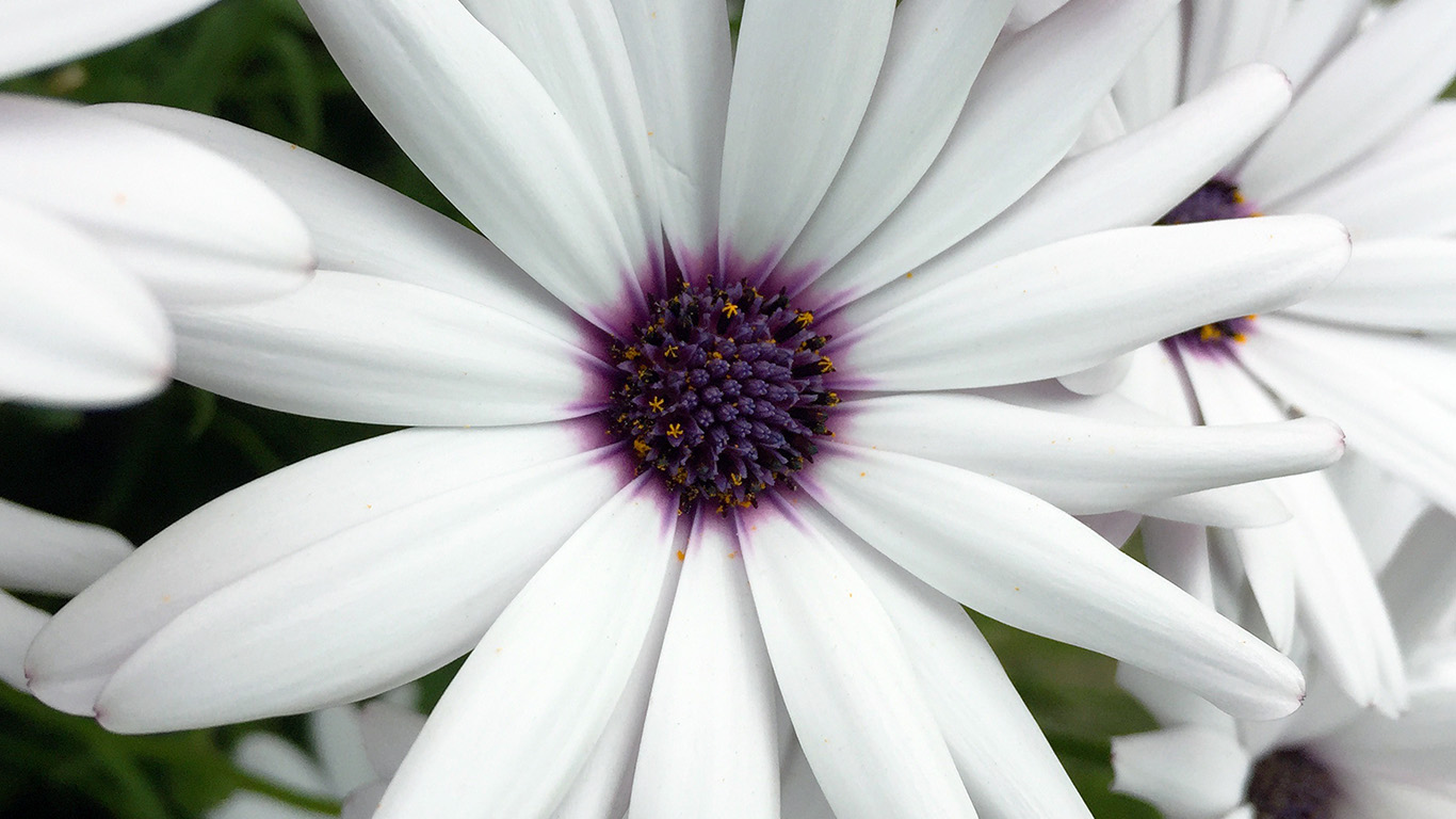 desktop-wallpaper-laptop-mac-macbook-air-ne81-flower-purple-white-spring-nature-wallpaper