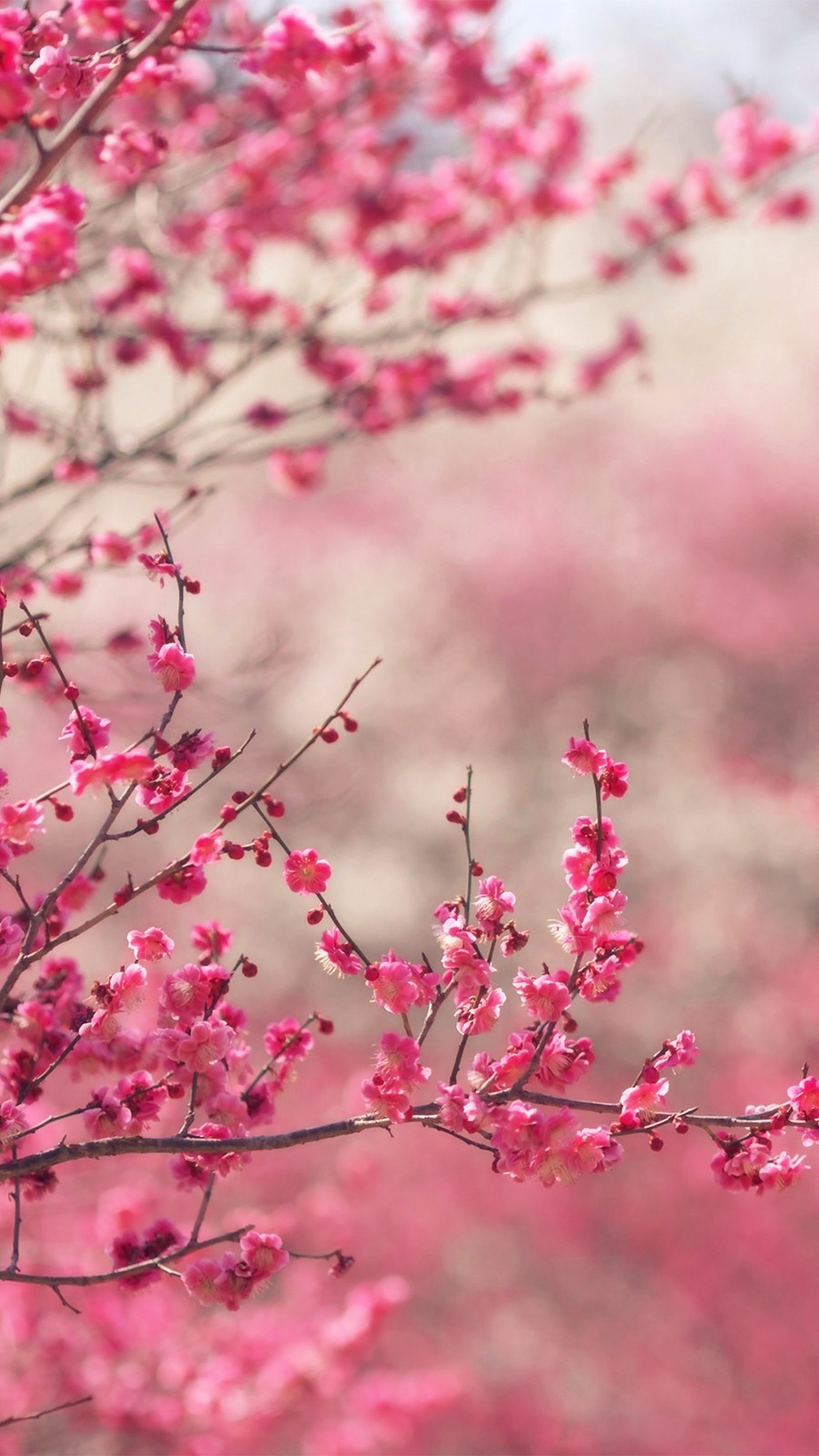 Iphone7papers Com Iphone7 Wallpaper Nf14 Pink Blossom Nature
