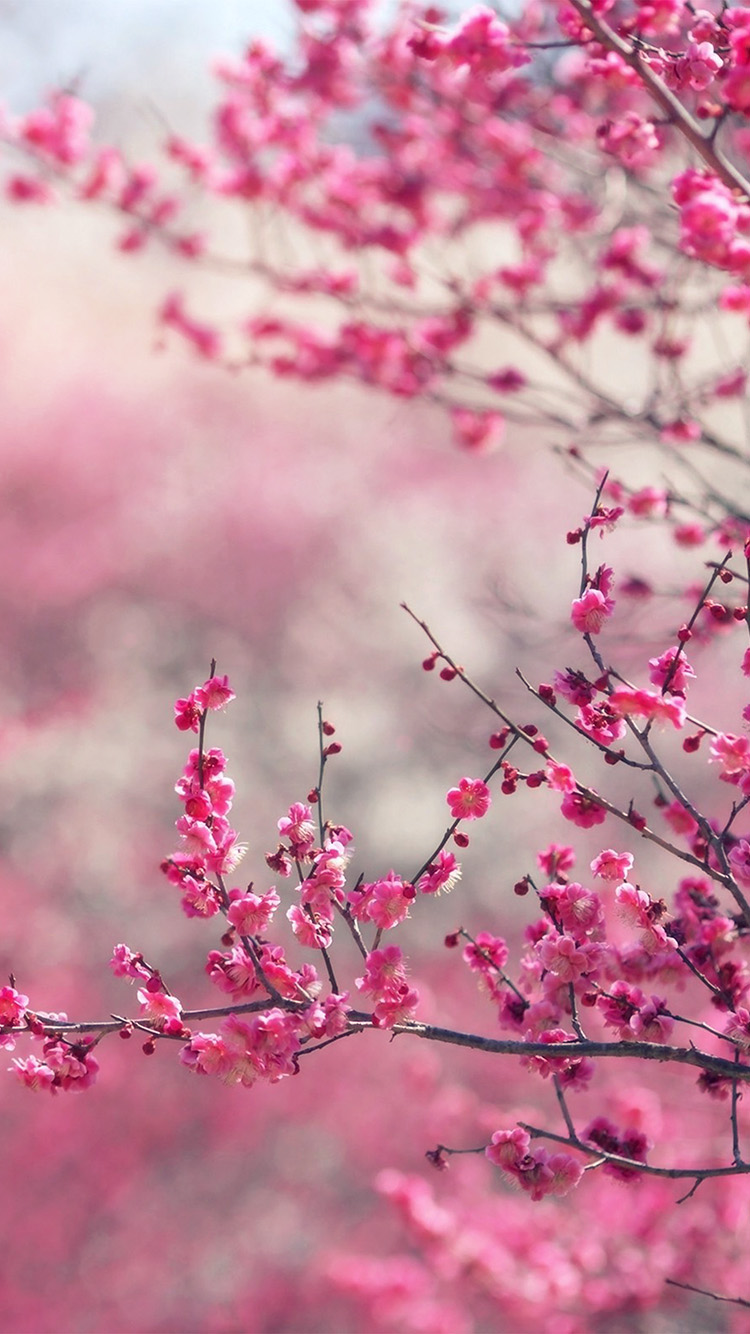 iPhone7papers.com-Apple-iPhone7-iphone7plus-wallpaper-nf15-pink-blossom-nature-flower-spring-love