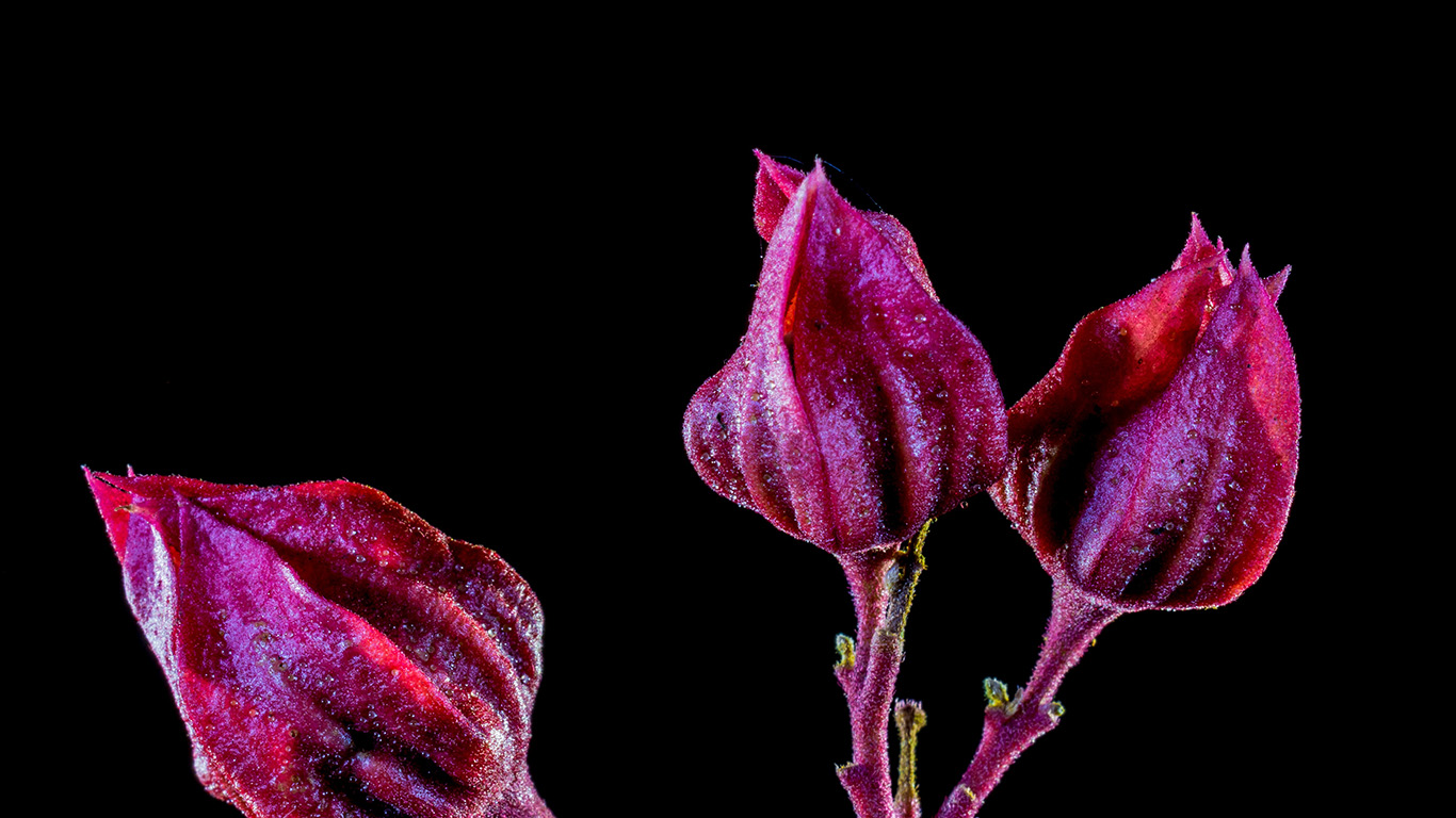desktop-wallpaper-laptop-mac-macbook-air-nf28-flower-red-dark-art-nature-wallpaper