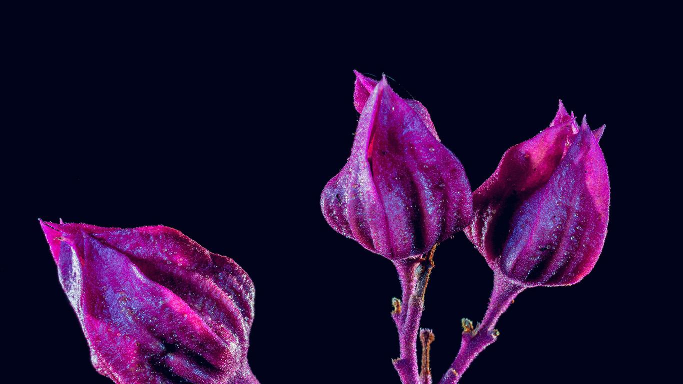 desktop-wallpaper-laptop-mac-macbook-air-nf29-flower-red-dark-art-nature-purple-wallpaper
