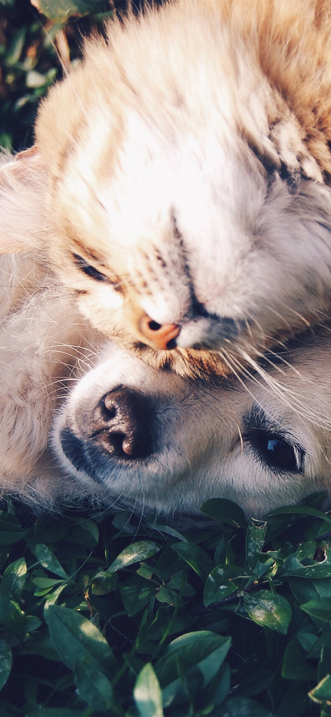 Nf34 Cat And Dog Animal Love Nature Pure Wallpaper