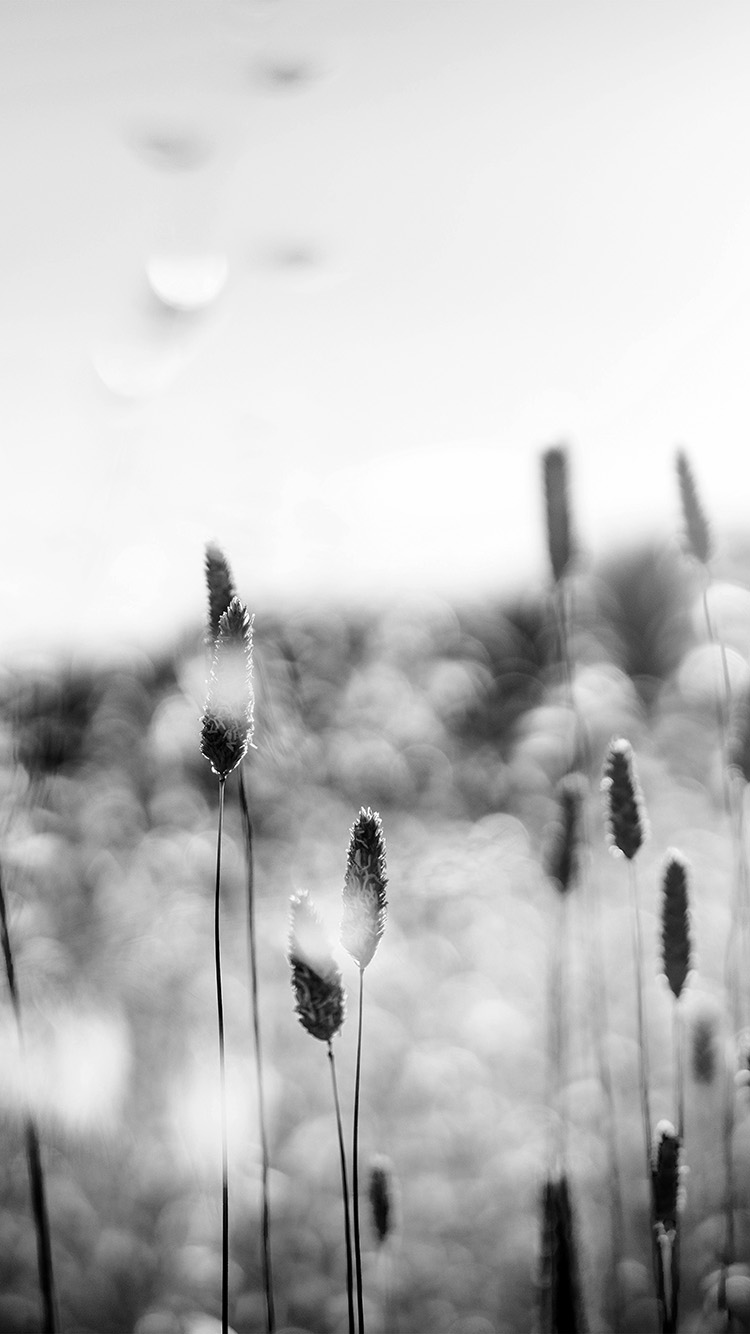 iPhonepapers.com-Apple-iPhone-wallpaper-nf51-flower-bokeh-spring-sunlight-nature-fantastic-dark-bw
