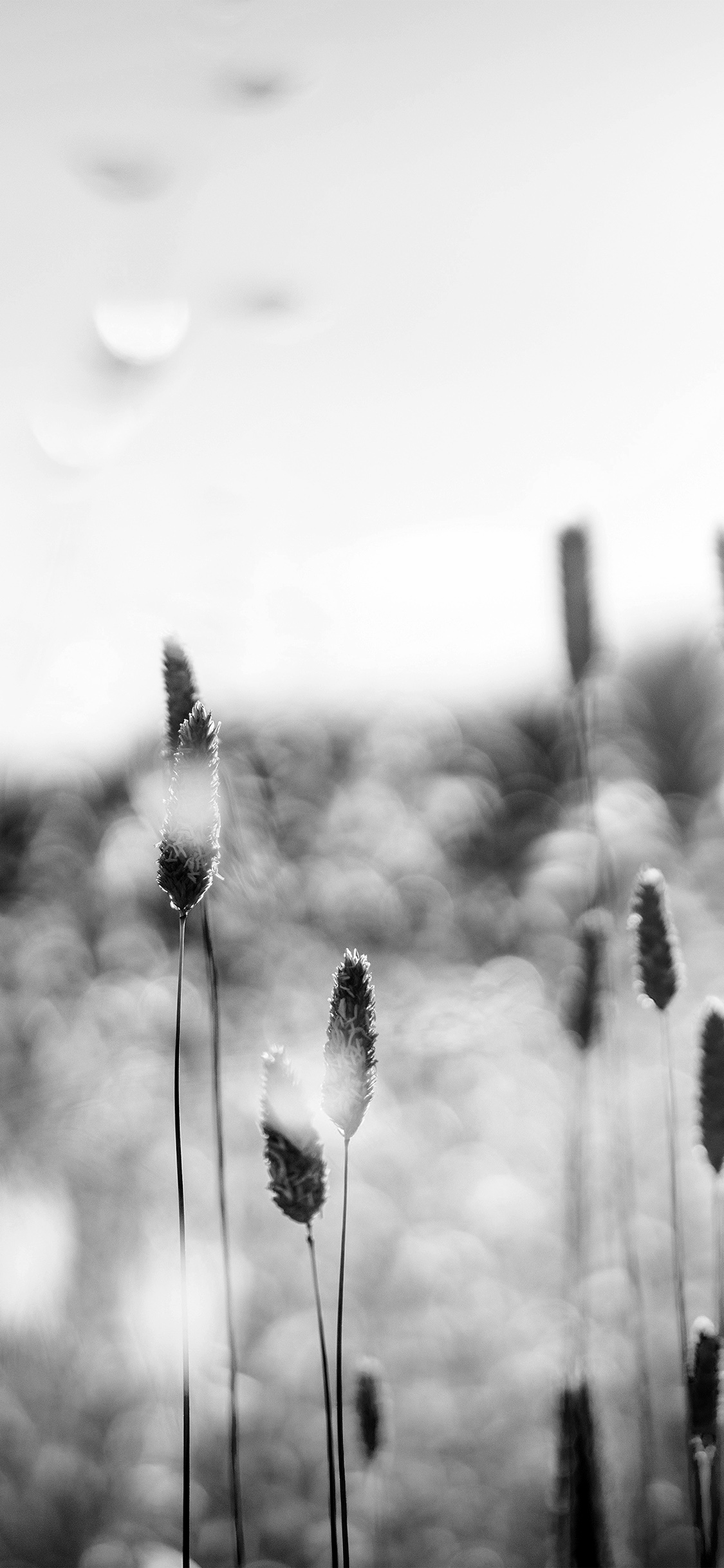 iPhonexpapers.com-Apple-iPhone-wallpaper-nf51-flower-bokeh-spring-sunlight-nature-fantastic-dark-bw