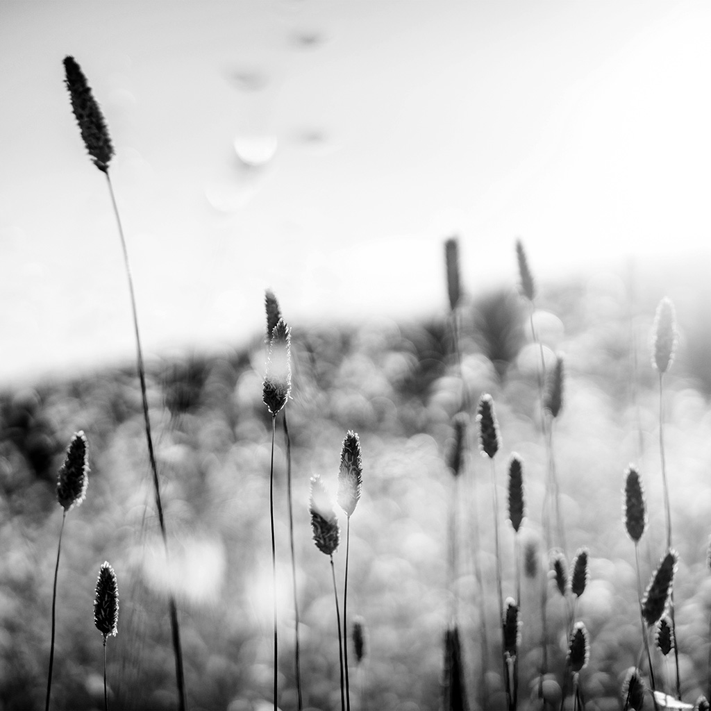 android-wallpaper-nf51-flower-bokeh-spring-sunlight-nature-fantastic-dark-bw-wallpaper