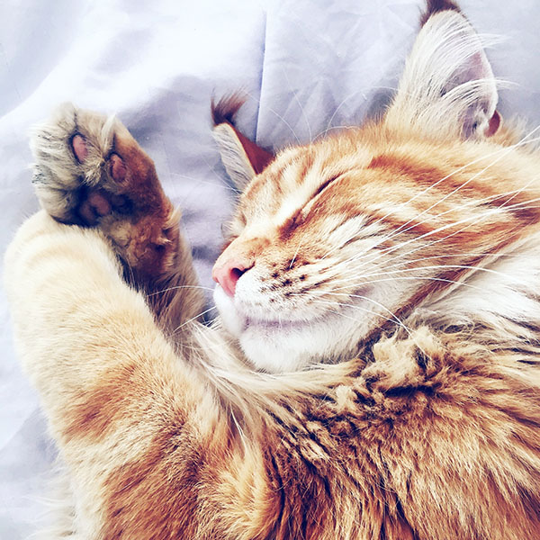 iPapers.co-Apple-iPhone-iPad-Macbook-iMac-wallpaper-nf64-cat-nap-sleeping-animal-cute-orange-blue-wallpaper