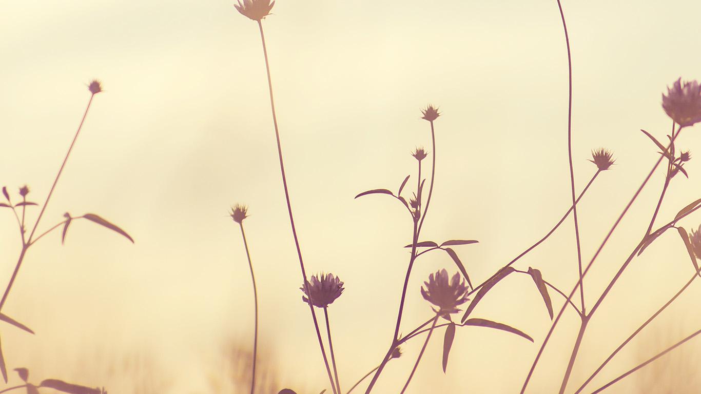 desktop-wallpaper-laptop-mac-macbook-air-nf90-flower-nature-fall-romantic-old-wallpaper