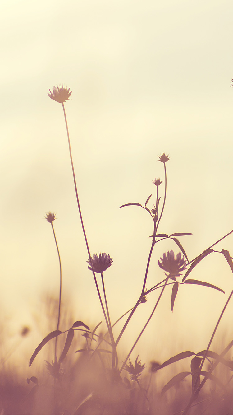 iPhone6papers.co-Apple-iPhone-6-iphone6-plus-wallpaper-nf90-flower-nature-fall-romantic-old