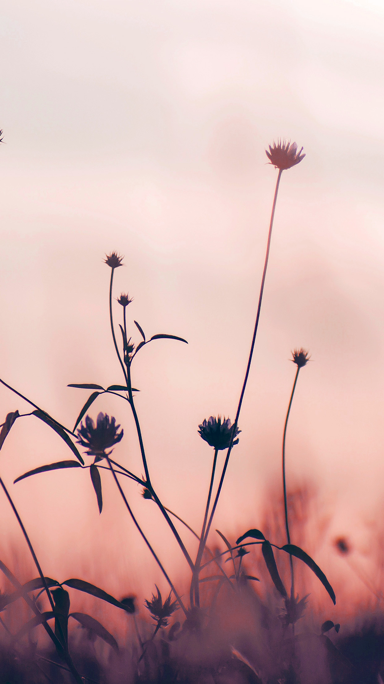 papers.co nf91 flower nature fall romantic old pink 34 iphone6 plus wallpaper