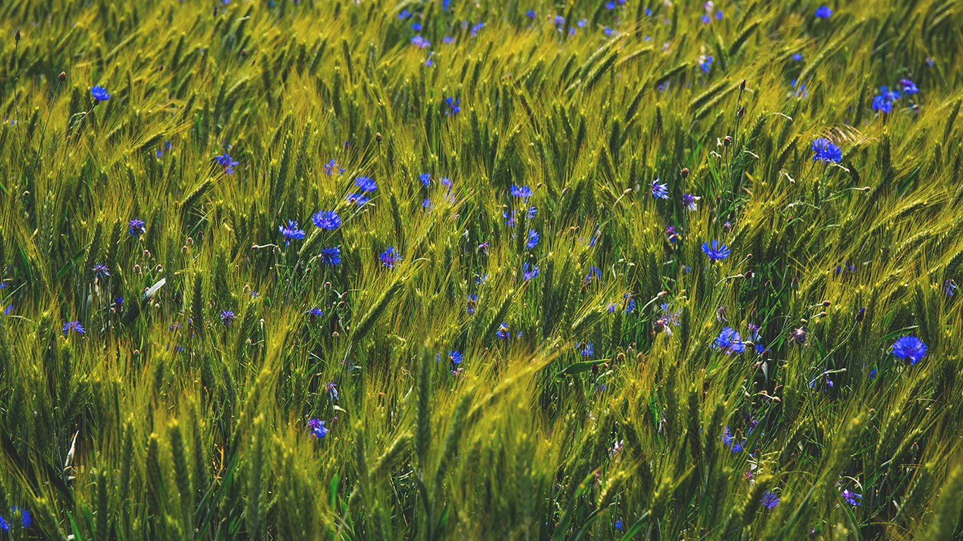 desktop-wallpaper-laptop-mac-macbook-air-ng10-flower-blue-nature-love-summer-day-wallpaper