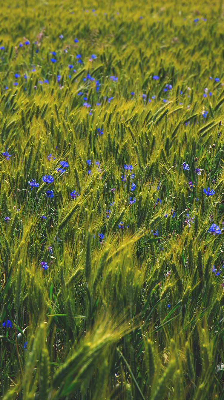 iPhone6papers.co-Apple-iPhone-6-iphone6-plus-wallpaper-ng10-flower-blue-nature-love-summer-day