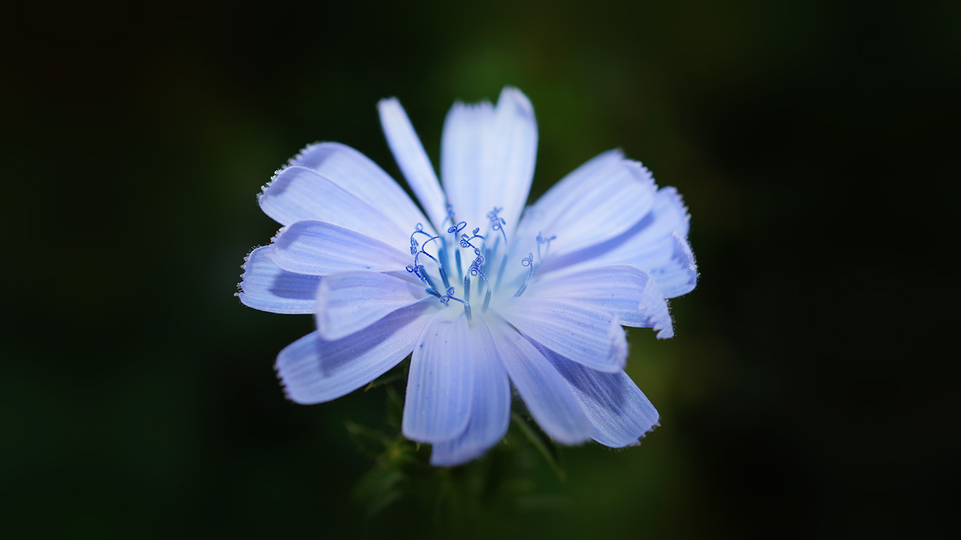 desktop-wallpaper-laptop-mac-macbook-air-ng14-flower-blue-spring-new-life-nature-dark-wallpaper
