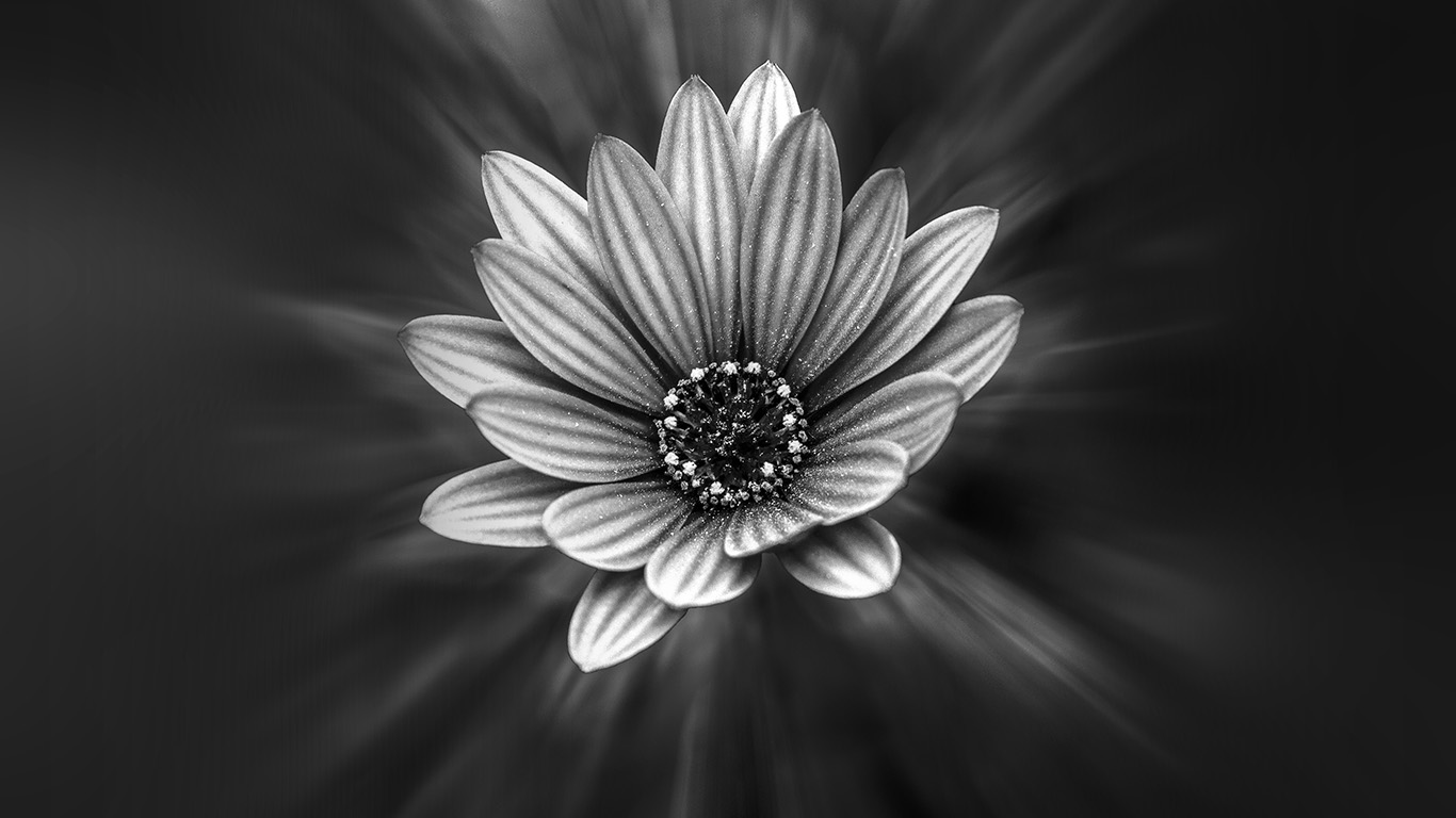 desktop-wallpaper-laptop-mac-macbook-air-ng48-flower-dark-black-nature-bw-wallpaper