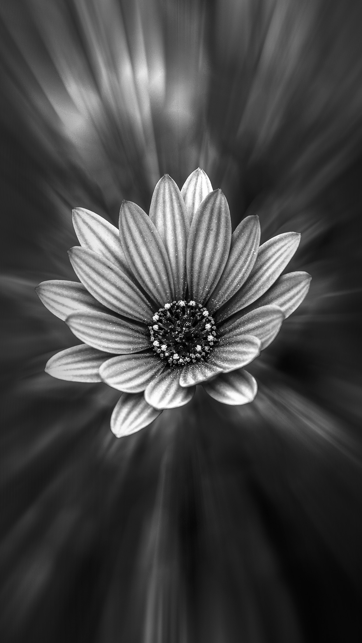Iphone7papers Com Iphone7 Wallpaper Ng48 Flower Dark Black Nature Bw