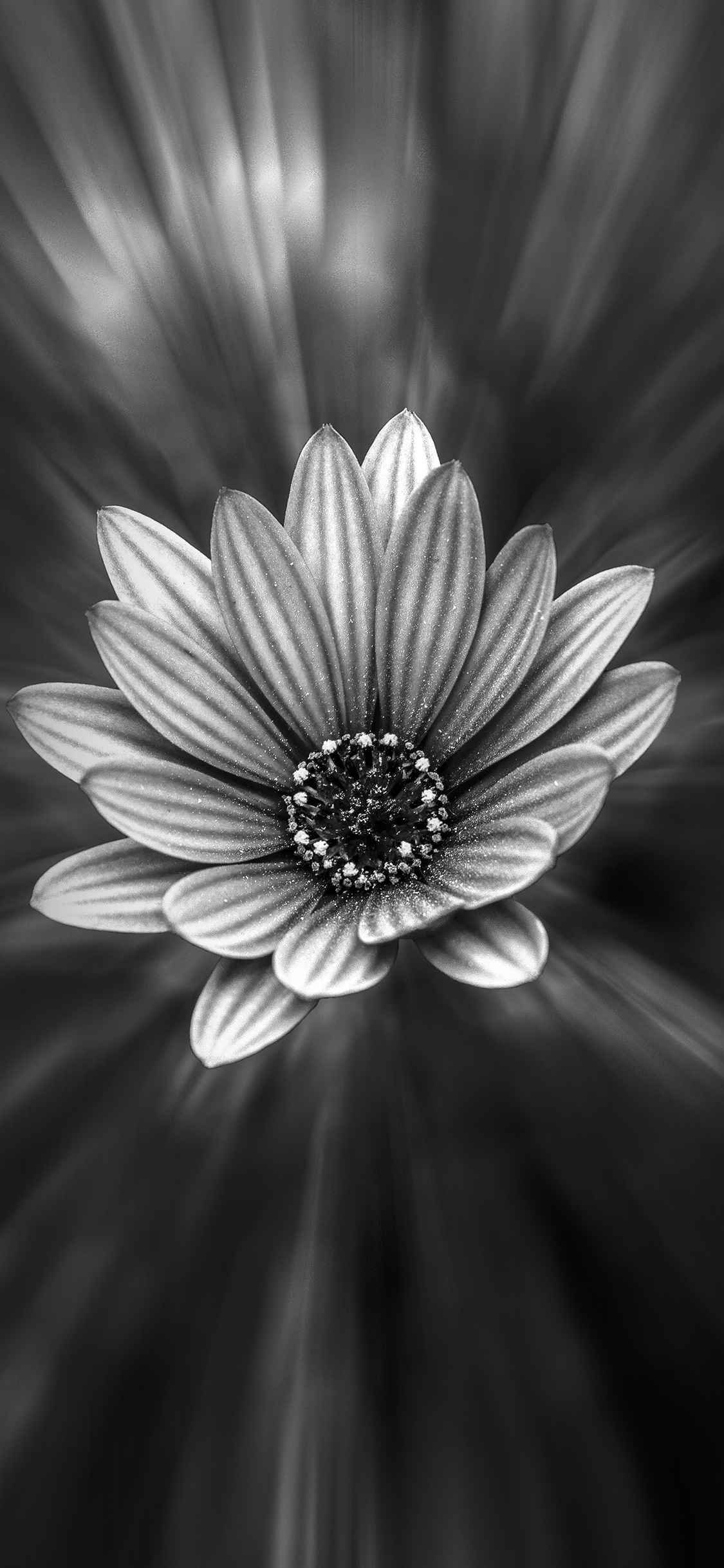 Iphonexpapers Com Iphone X Wallpaper Ng48 Flower Dark Black Nature Bw