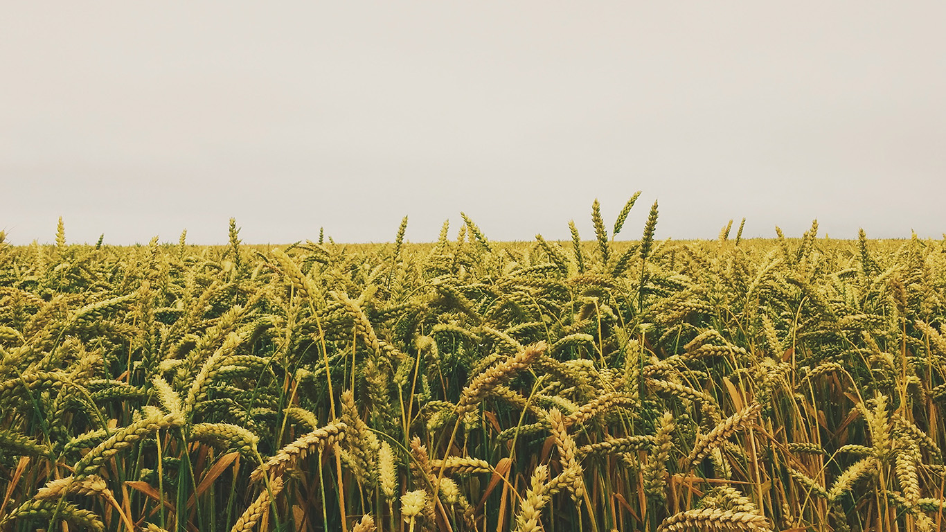 desktop-wallpaper-laptop-mac-macbook-air-ng51-flower-reed-field-rice-nature-green-yellow-wallpaper