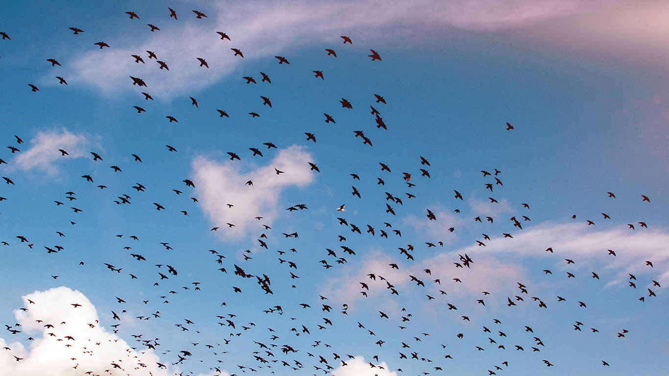 desktop-wallpaper-laptop-mac-macbook-air-ng84-birds-sky-animal-fly-blue-cloud-nature-flare-wallpaper