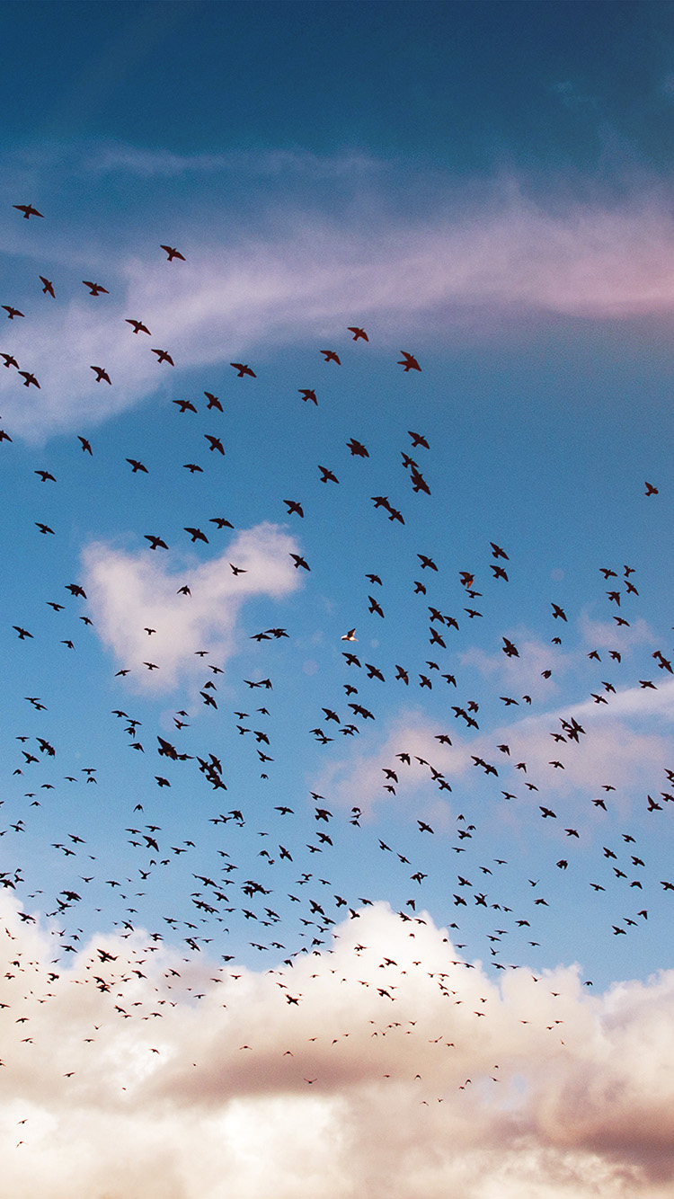 iPhone6papers.co-Apple-iPhone-6-iphone6-plus-wallpaper-ng84-birds-sky-animal-fly-blue-cloud-nature-flare
