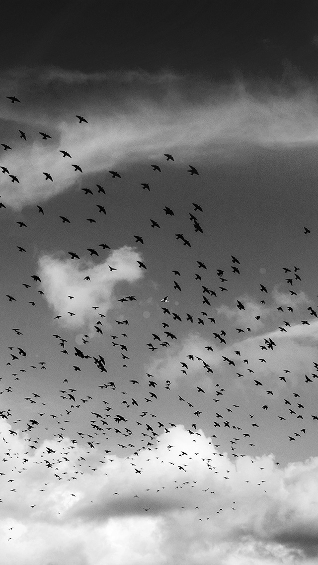 freeios8.com-iphone-4-5-6-plus-ipad-ios8-ng85-birds-sky-animal-fly-cloud-nature-flare-dark-bw