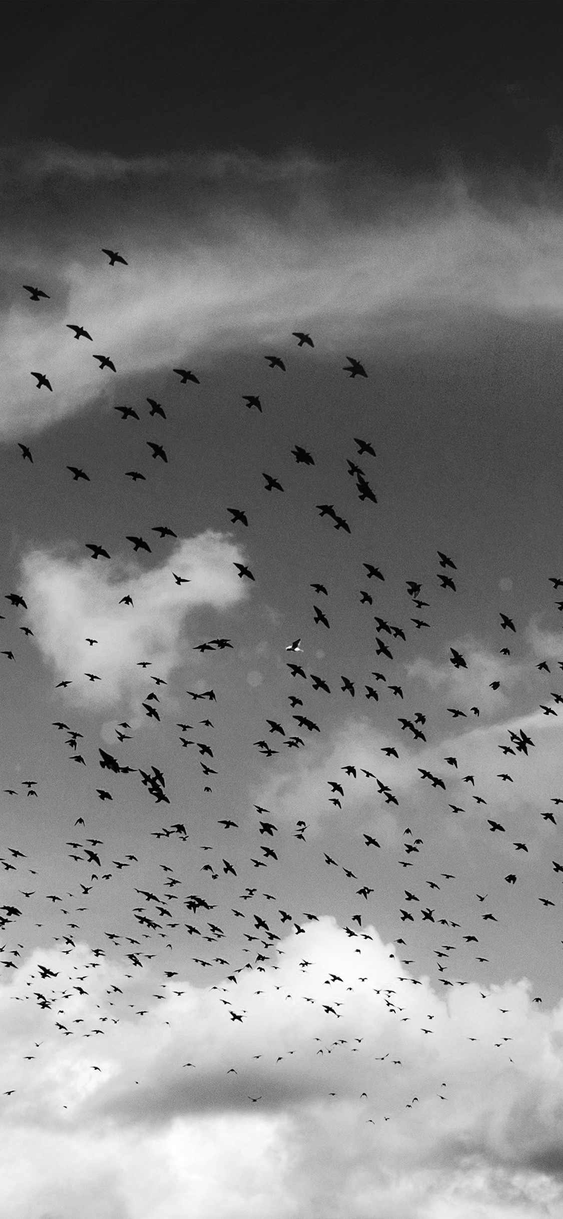 iPhonexpapers.com-Apple-iPhone-wallpaper-ng85-birds-sky-animal-fly-cloud-nature-flare-dark-bw
