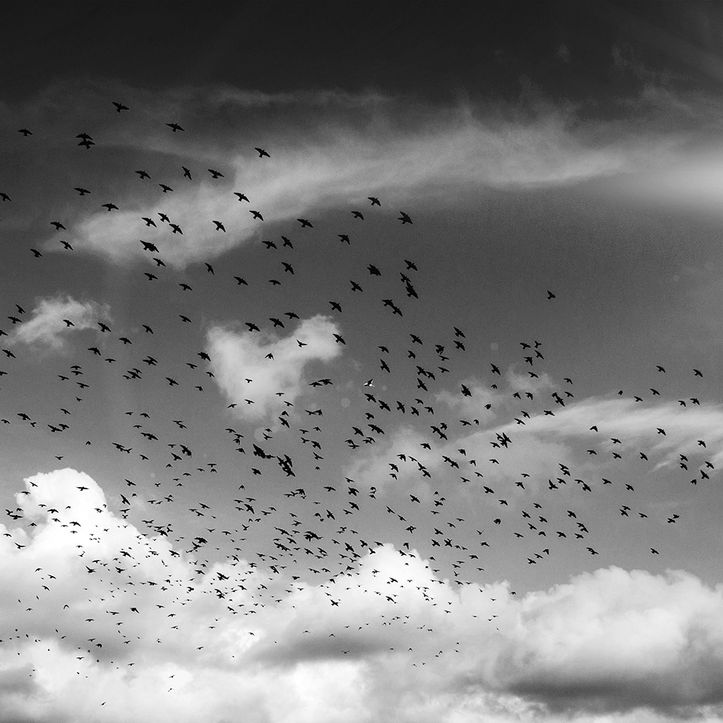 wallpaper-ng85-birds-sky-animal-fly-cloud-nature-flare-dark-bw-wallpaper