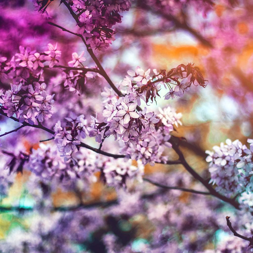 wallpaper-ng99-flower-pink-blue-nature-bokeh-tree-spring-rainbow-flare-wallpaper