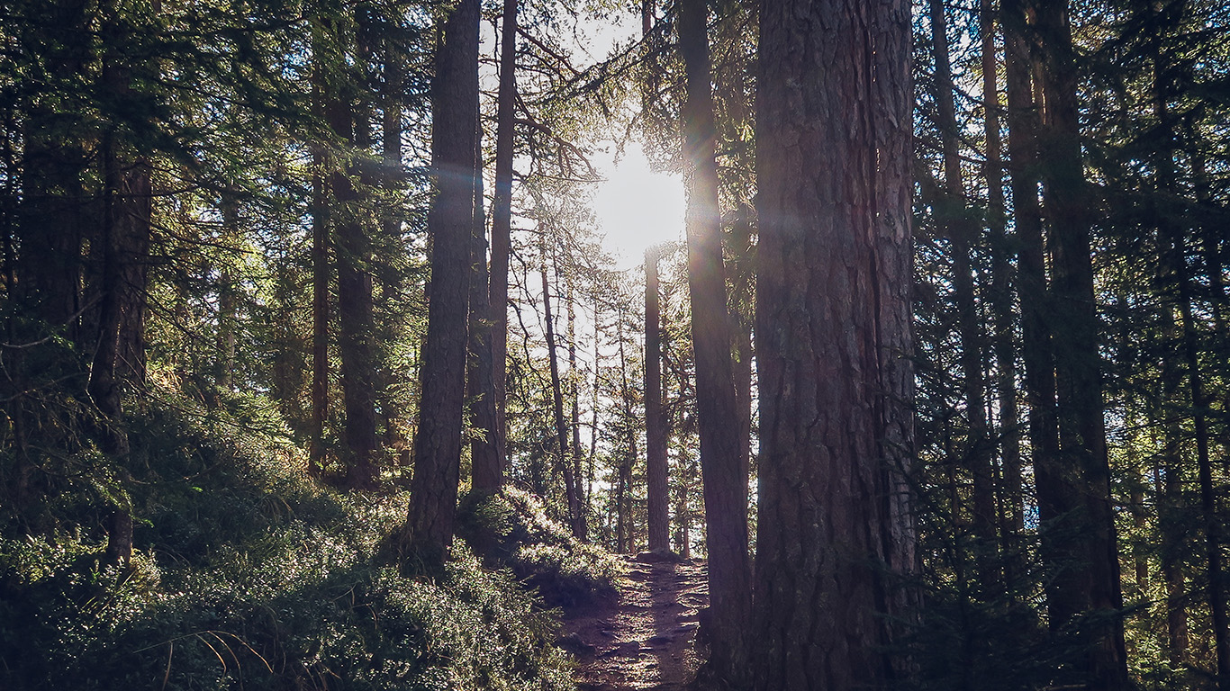 desktop-wallpaper-laptop-mac-macbook-air-nh09-light-wood-sun-forest-mountain-nature-wallpaper