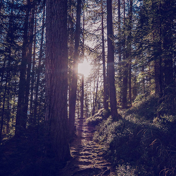 iPapers.co-Apple-iPhone-iPad-Macbook-iMac-wallpaper-nh10-light-wood-sun-forest-mountain-nature-blue-wallpaper