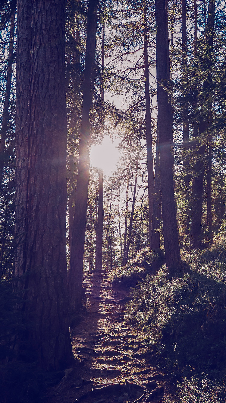 Papers.co-iPhone5-iphone6-plus-wallpaper-nh10-light-wood-sun-forest-mountain-nature-blue
