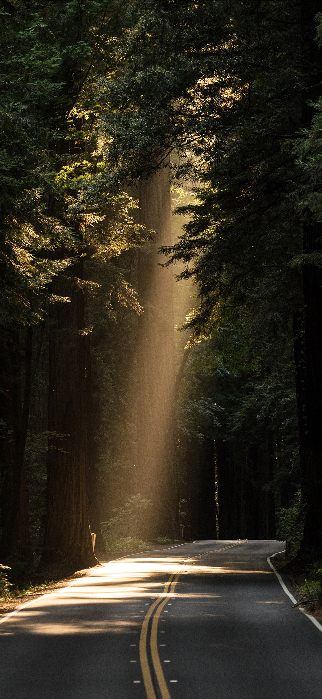 Nh15 Light Road Wood Forest Way Nature Wallpaper