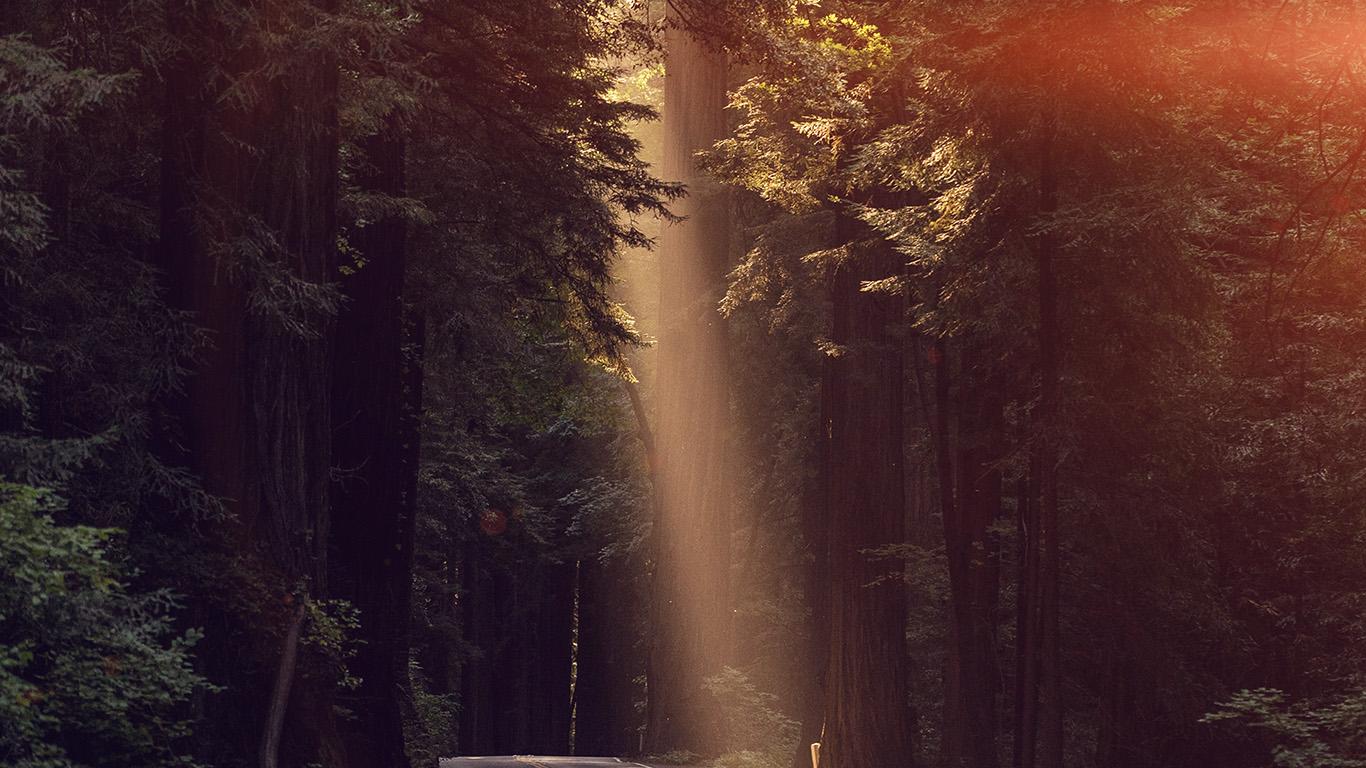 desktop-wallpaper-laptop-mac-macbook-air-nh16-light-road-wood-forest-way-nature-flare-wallpaper