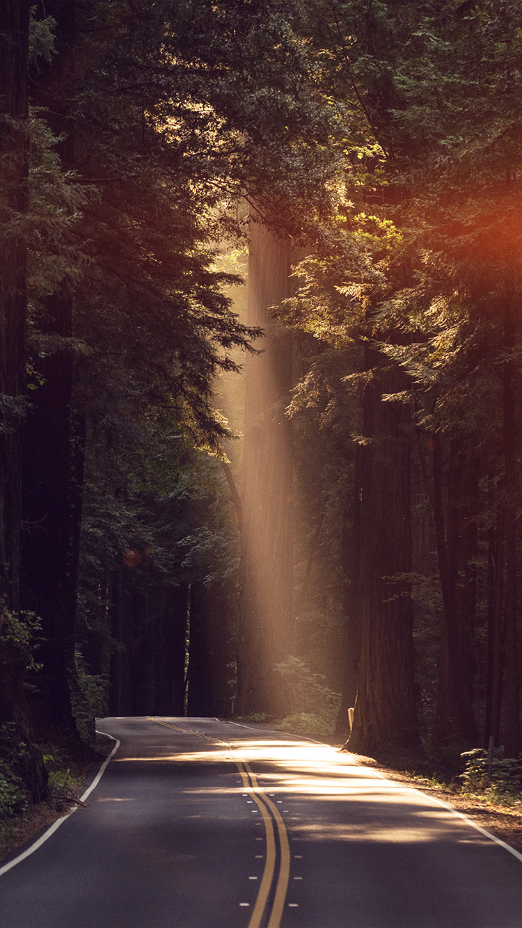 Papers.co-iPhone5-iphone6-plus-wallpaper-nh16-light-road-wood-forest-way-nature-flare